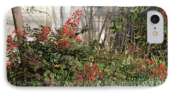 IPhone Case featuring the photograph Austin Winter Berries by Linda Phelps