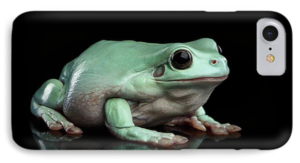 Australian Green Tree Frog, Or Litoria Caerulea Isolated Black Background IPhone 7 Case