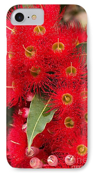 Australian Red Eucalyptus Flowers IPhone Case