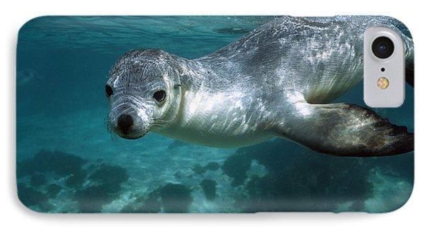 Australian Sea Lion Neophoca Cinerea Phone Case by Hiroya Minakuchi