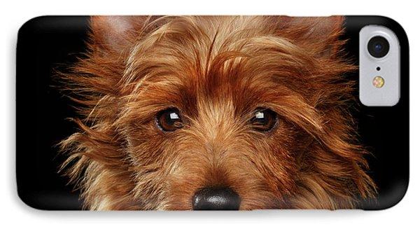 Australian Terrier IPhone Case by Sergey Taran