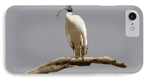 Ibis iPhone 7 Case - Australian White Ibis Perched by Mike  Dawson
