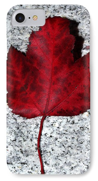 Autum Maple Leaf 1 Phone Case by Robert Morin