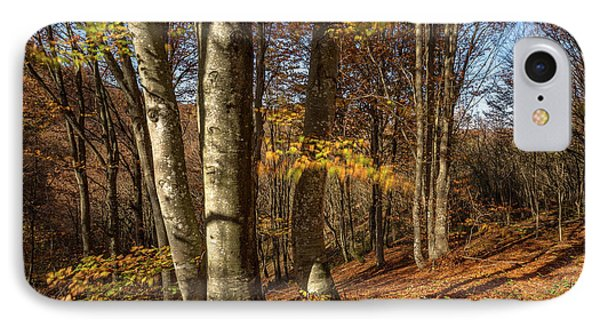 IPhone Case featuring the photograph Autumn Afternoon In Forest by Davorin Mance