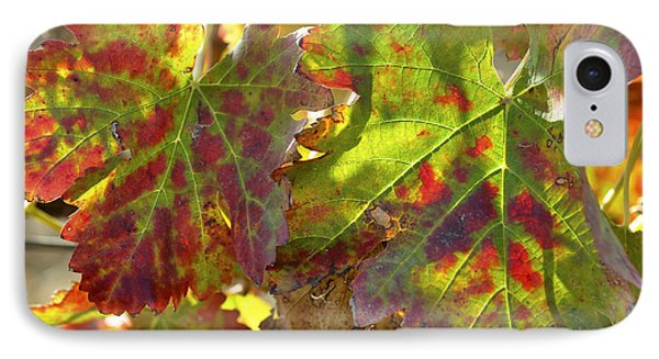 IPhone Case featuring the photograph Autumn At Lachish Vineyards 2 by Dubi Roman