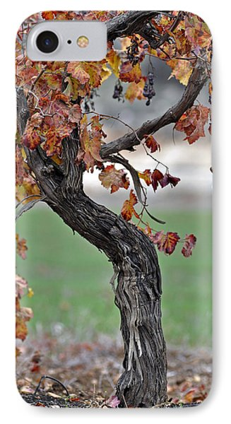 IPhone Case featuring the photograph Autumn At Lachish Vineyards 3 by Dubi Roman