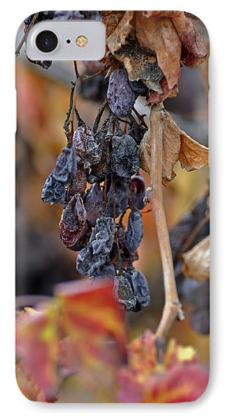 IPhone Case featuring the photograph Autumn At Lachish Vineyards 4 by Dubi Roman