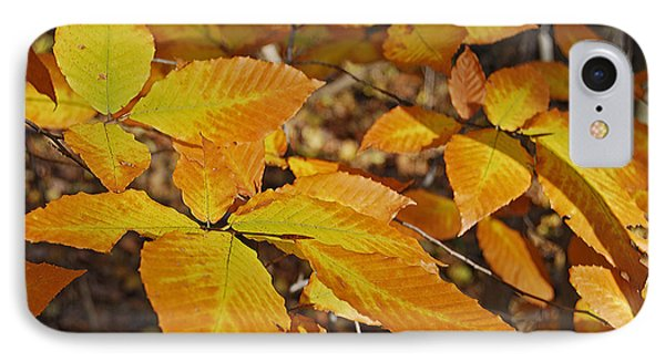 Autumn Beech  Phone Case by Michael Peychich
