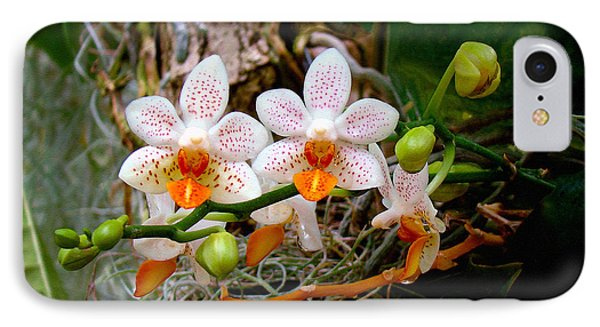 Autumn Colored Orchids IPhone Case