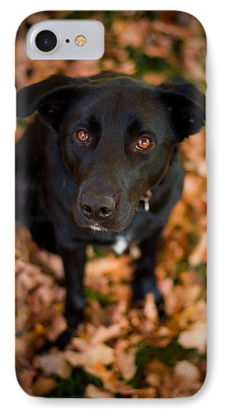 Autumn Dog IPhone Case