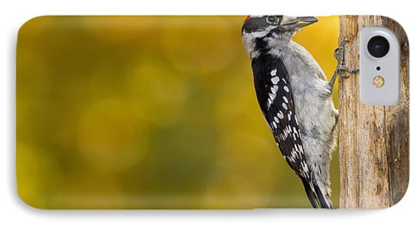 Autumn Downy With A Seed IPhone Case by Bill Tiepelman