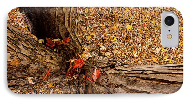 Autumn Fall Phone Case by James BO  Insogna