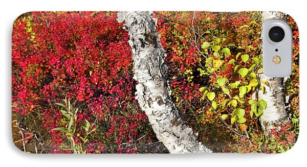 Autumn Foliage In Finland Phone Case by Heiko Koehrer-Wagner
