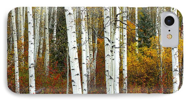 Autumn Forest Beauty IPhone Case by Tim Reaves