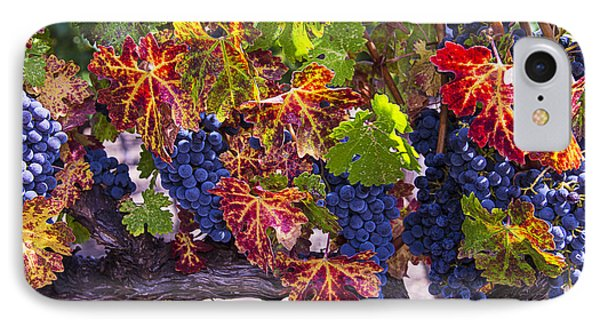 Autumn Grapes Harvest IPhone Case by Garry Gay