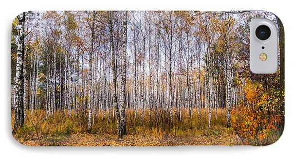 Autumn In The Birch Grove IPhone Case by Dmytro Korol