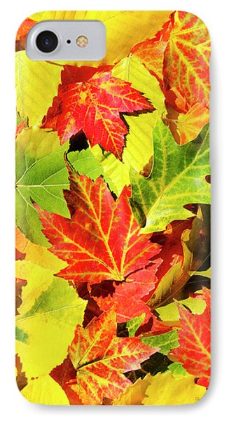 IPhone Case featuring the photograph Autumn Leaves by Christina Rollo