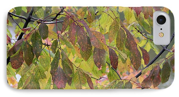 IPhone Case featuring the photograph Autumn Leaves by Doris Potter