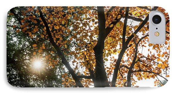 Autumn Light IPhone Case by Jamie Pham