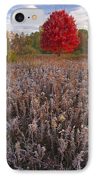 Autumn Maple In Frosted Meadow Phone Case by Dean Pennala