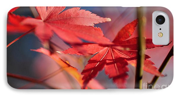 Autumn Maple IPhone Case by Kaye Menner