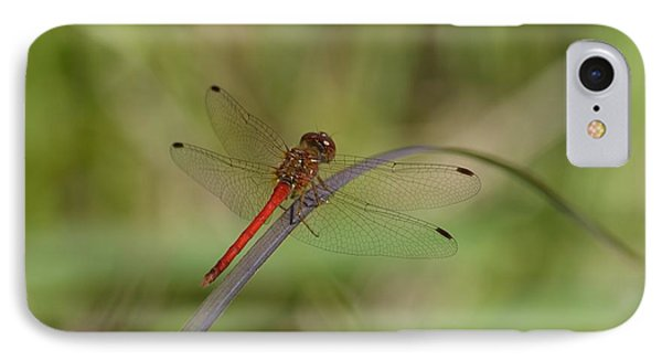 Autumn Meadowhawk IPhone Case by Randy Bodkins