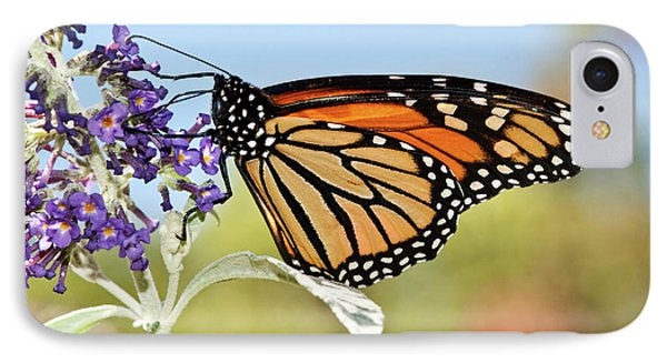 IPhone Case featuring the photograph Autumn Monarch Butterfly 2016 by Lara Ellis