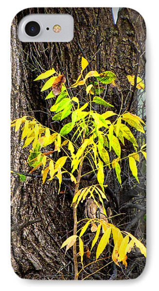 Autumn - Nature Photography IPhone Case