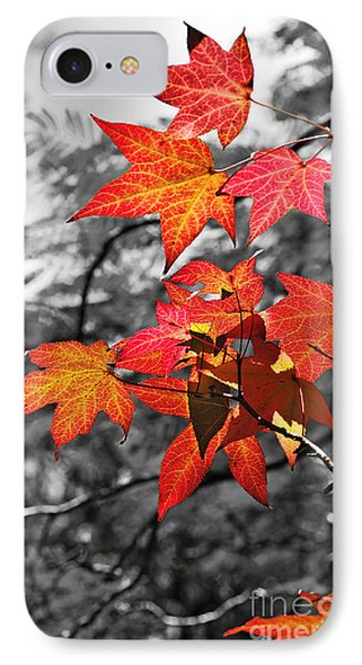 Autumn On Black And White IPhone Case by Kaye Menner