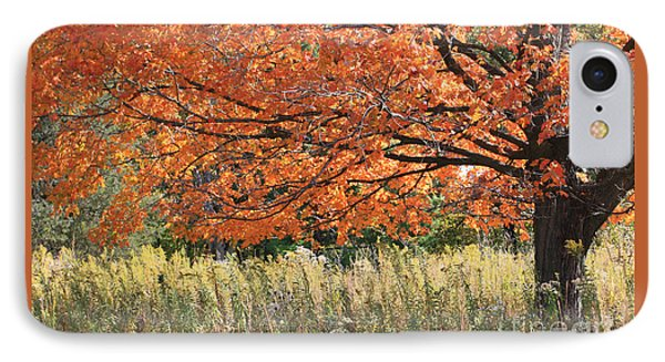Autumn Red   IPhone Case by Paula Guttilla