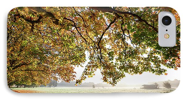 Autumn Scene With Overhanging Trees IPhone Case