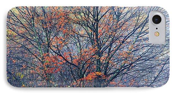 Autumn Sugar Maple In Fog Phone Case by Thomas R Fletcher