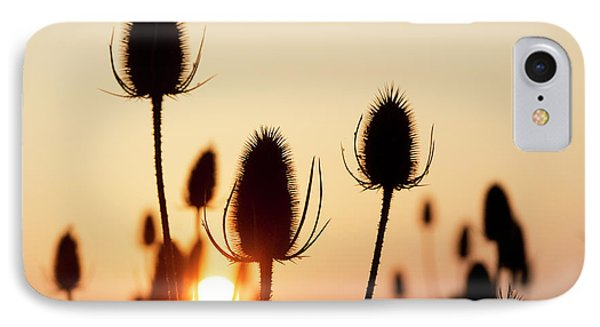IPhone Case featuring the photograph Autumn Sunrise Teasels by Tim Gainey