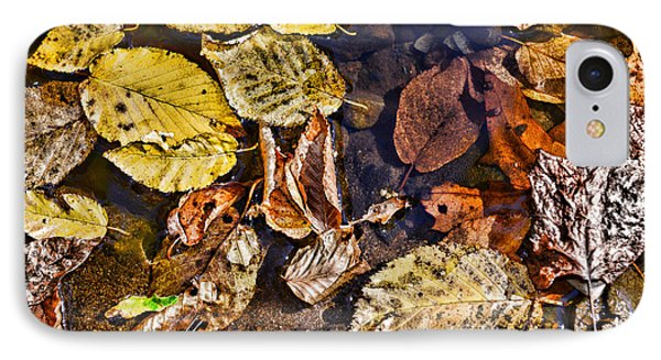 Autumn The Color Of Nature IPhone Case by Paul Ward