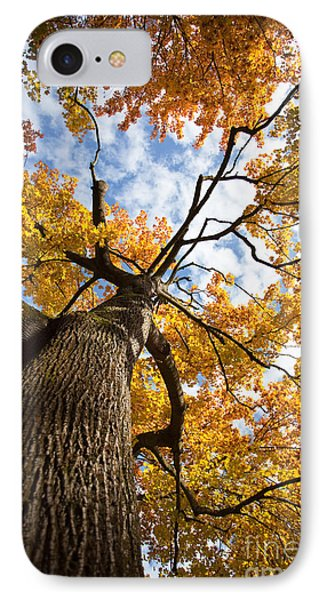 Autumn Tree IPhone Case by Nailia Schwarz