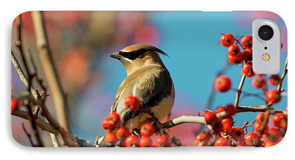 Autumn Waxwing IPhone Case by Mike Dawson