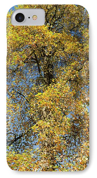 Autumnal Tulip Tree IPhone Case by Tim Gainey