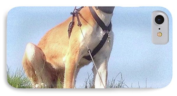 Ava-grace, Princess Of Arabia  #saluki Phone Case by John Edwards