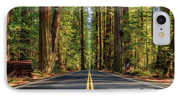 Avenue Of The Giants IPhone Case by James Eddy