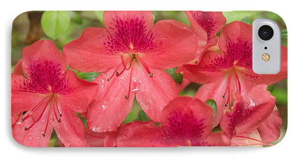 Azalea Blossoms IPhone Case by Linda Geiger