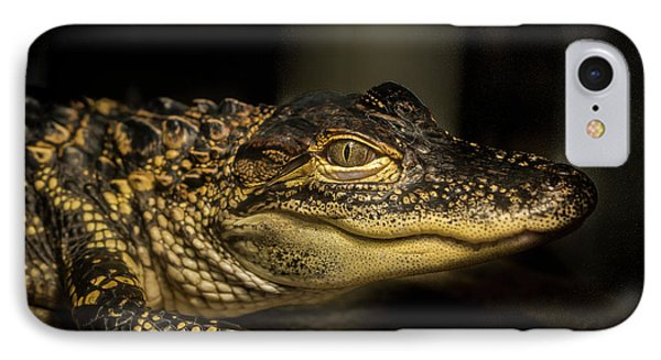 Baby Alligator IPhone Case by Jean Noren