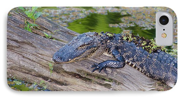 Baby Alligator Resting On A Log IPhone Case