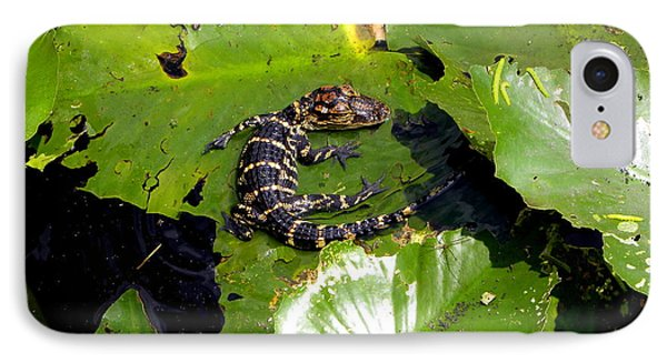 IPhone Case featuring the photograph Baby Alligator by Terri Mills