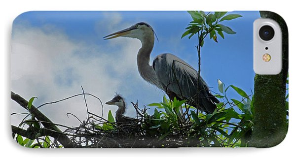 Baby And Mom Great Blue Heron IPhone Case by Judy Wanamaker