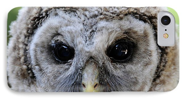 Baby Barred Owl-2 IPhone Case