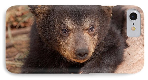 Baby Bear Portrait IPhone Case by Laurinda Bowling