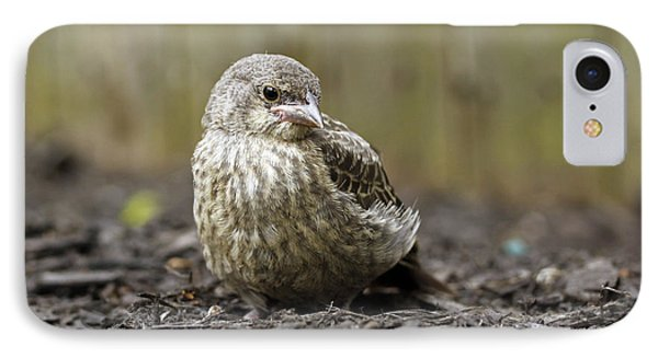 Baby Bird IPhone Case by Denise Pohl