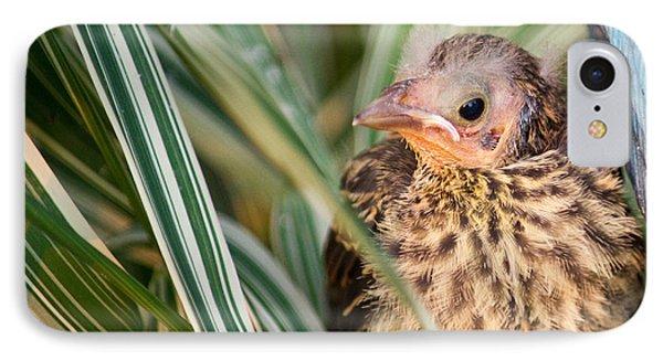 Baby Bird Peering Out Phone Case by Douglas Barnett