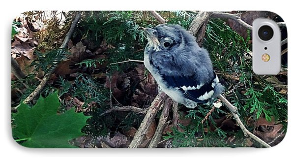 Baby Bluejay IPhone Case
