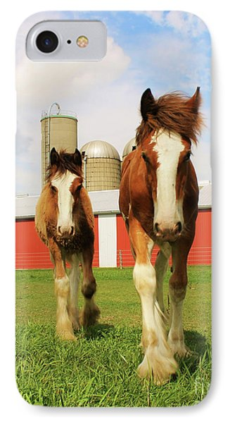 Baby Clydesdale's  IPhone Case by Anthony Djordjevic